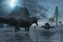 Spinosaurus group moving to a new hunting ground.