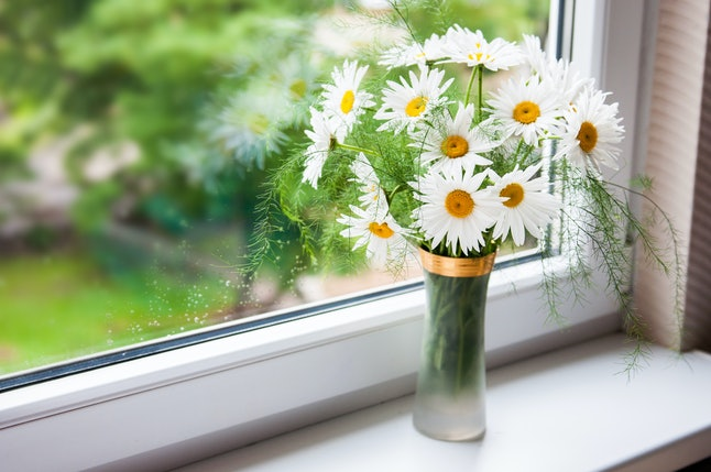 Beautiful bouquet of camomiles by the window