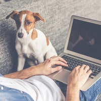 Why man's best friend is good and bad for your WFH career