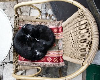 Cats sleeping one next to other forming a yin yang sign