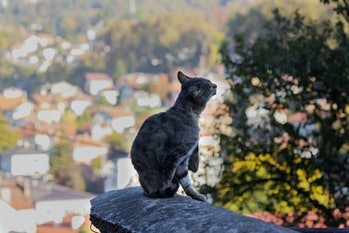 Cat sitting on the end of a wall