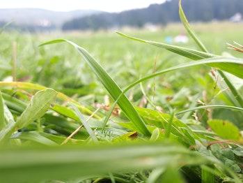 Gras closse up shoot AM