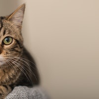 15 ways to keep your indoor cat happy: tips from vets