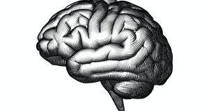 Monochrome engraved vintage drawing human brain in side view with woodcut print style illustration isolated on white background