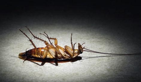 cockroach lies dead on a spotlight