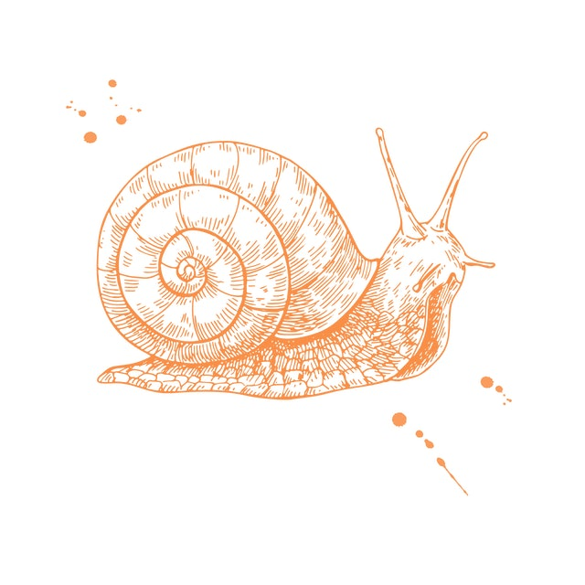 Snail vector drawing. Hand drawn isolated sketch. Engraved animal for label, logo, mucin and snail essence cosmetic cream. Packaging design element. Concept illustration.