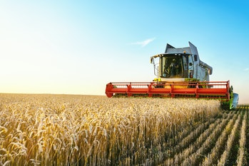 Combine harvester harvests ripe wheat. agriculture