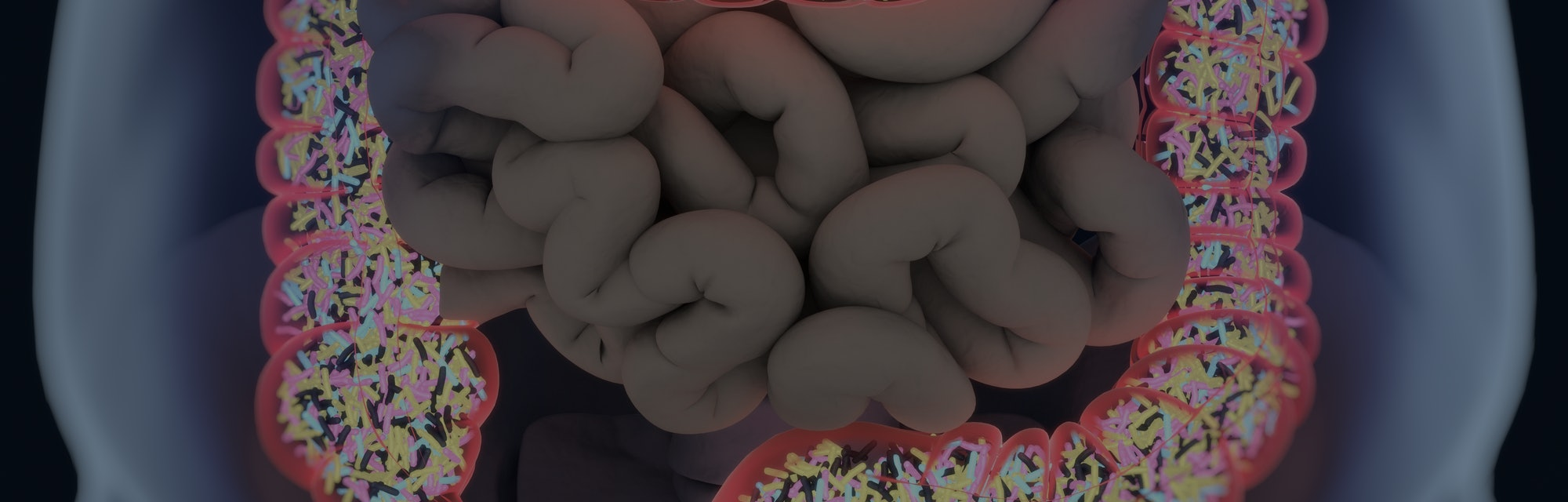 Gut bacteria, microbiome. Bacteria inside the large intestine, concept, representation. 3D illustration.
