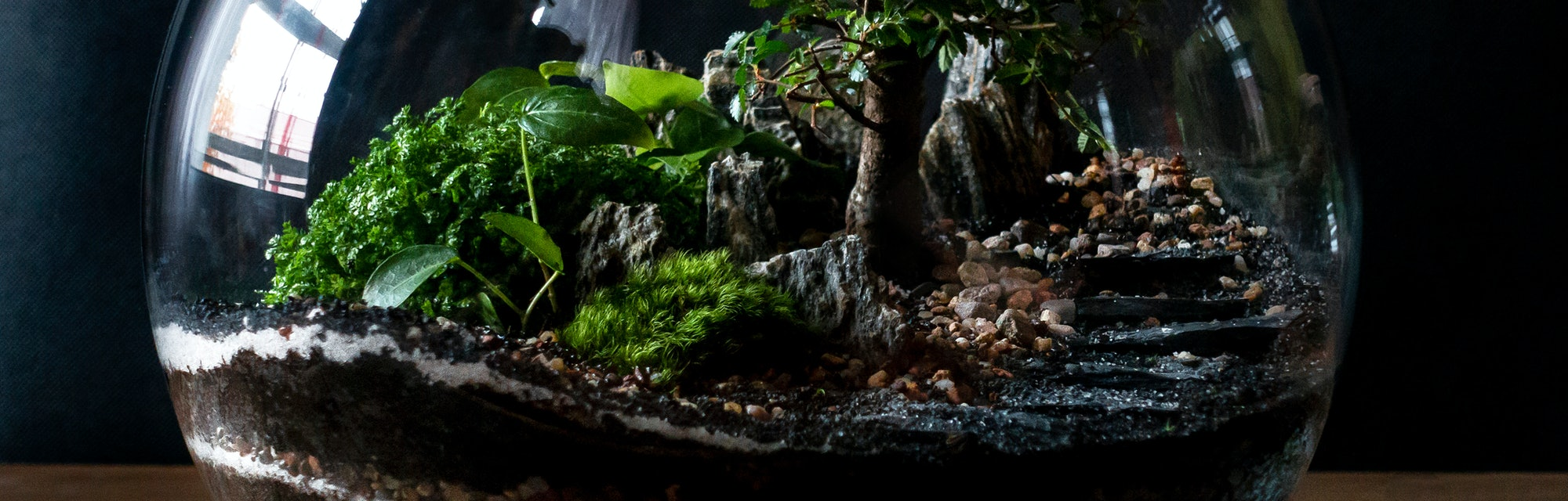 Small decoration plants in a glass bottle/garden terrarium bottle/ forest in a jar. Terrarium jar with piece of forest with self ecosystem. Save the earth concept