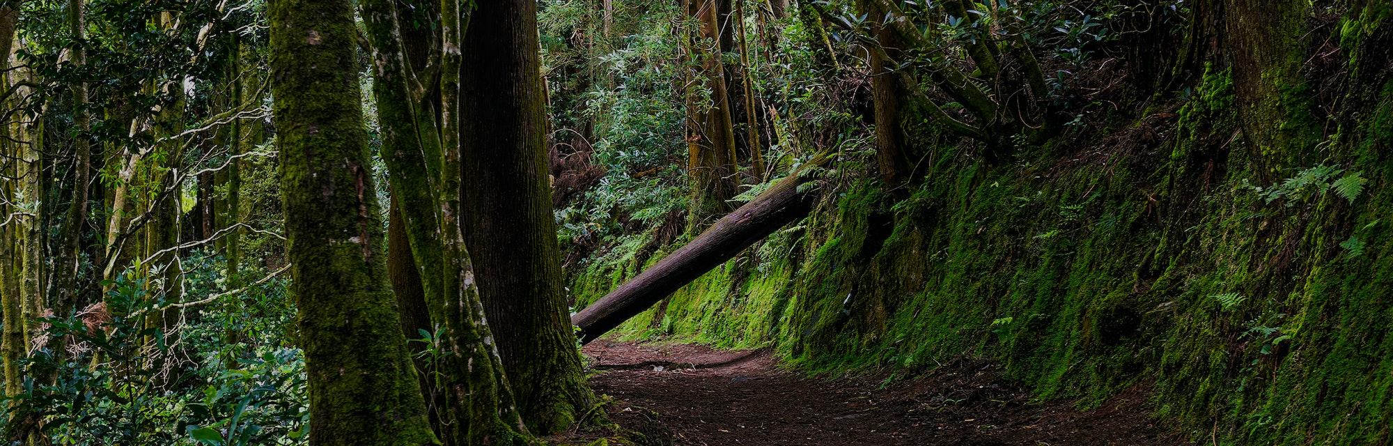 Dark forest road. Deep dark forest road trail. Forest road scene. Dark mossy forest road view