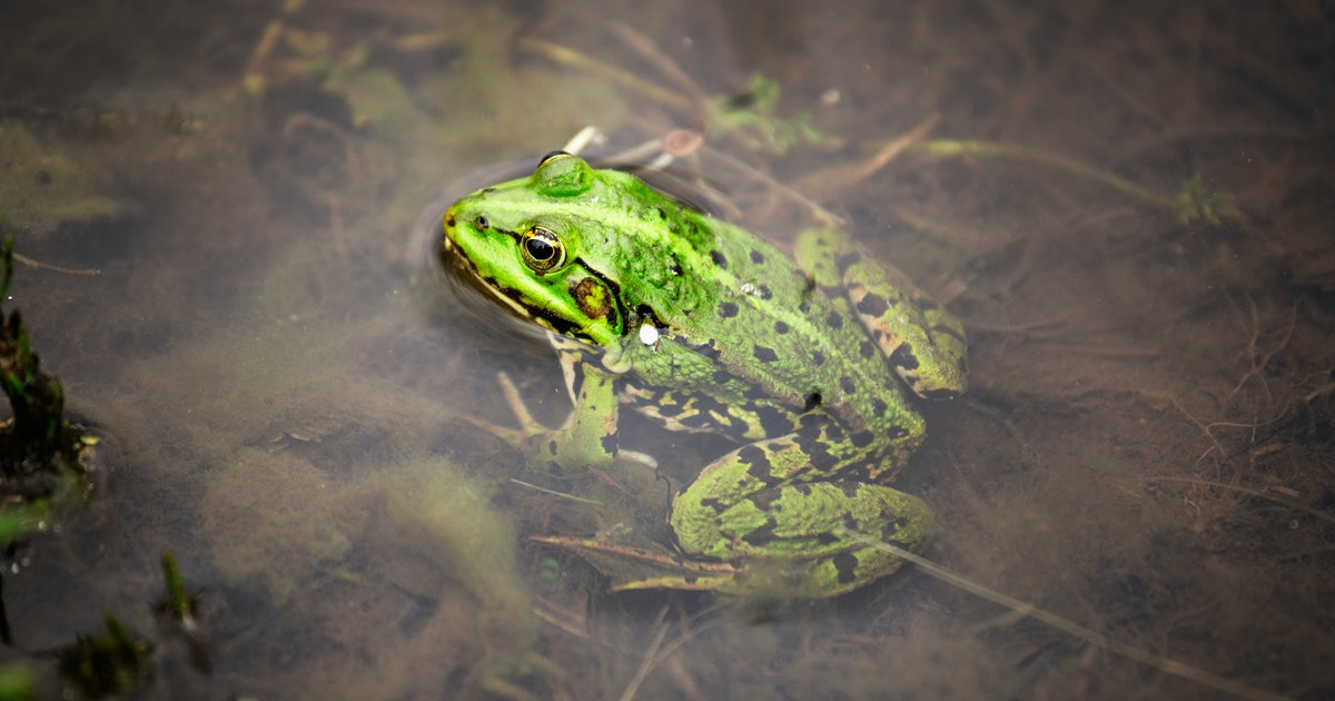 An alarming stat about frogs may lead them to extinction by 2035— study