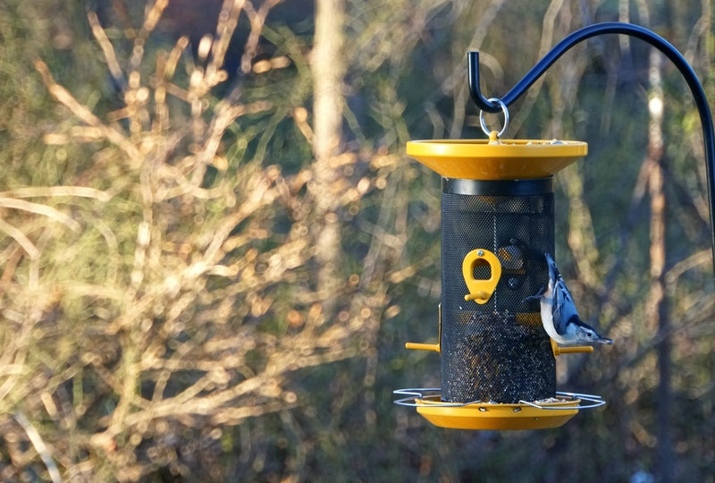 A beautiful blue nuthatch eating seeds on the bird feeder