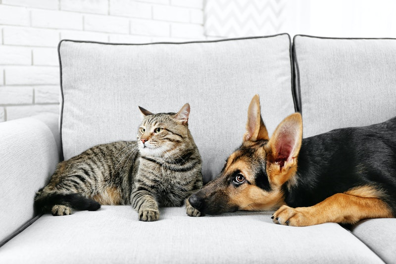 best couch covers for pets