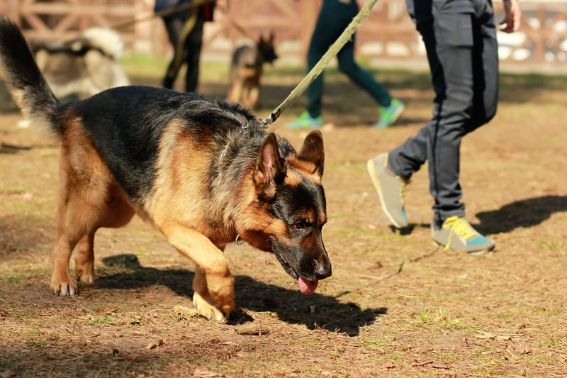 Dogs can sniff out coronavirus in people.