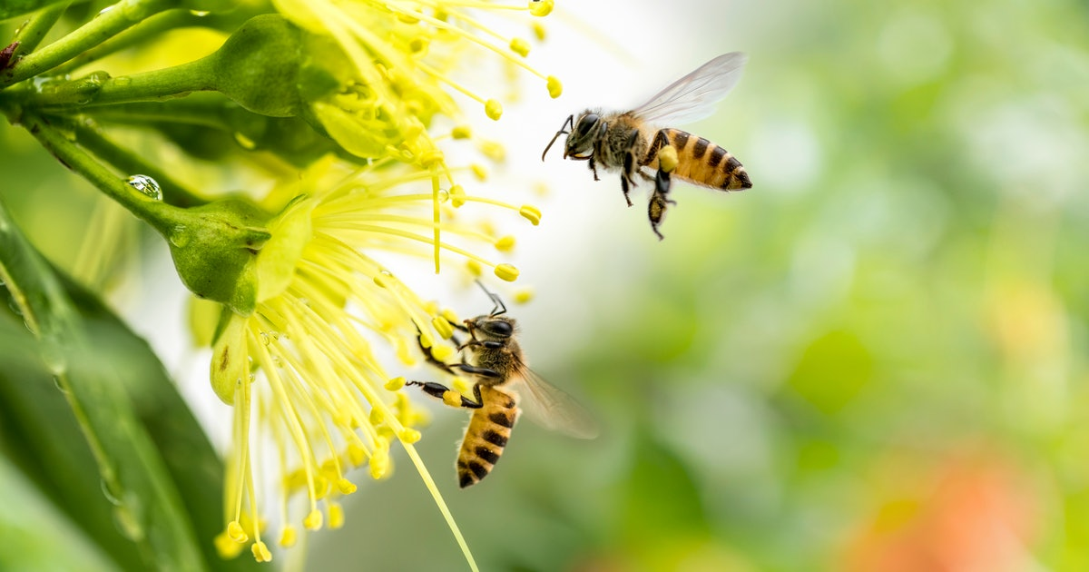 How To Grow A Pollinator Garden Since TikTok's Obsessed With Them