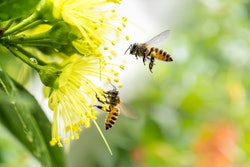 How to plant a pollinator flower garden that will attract bees.
