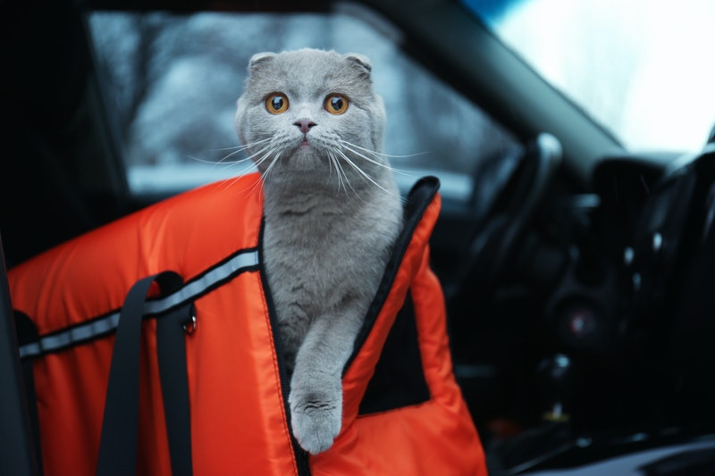 best cat carriers for scared cats