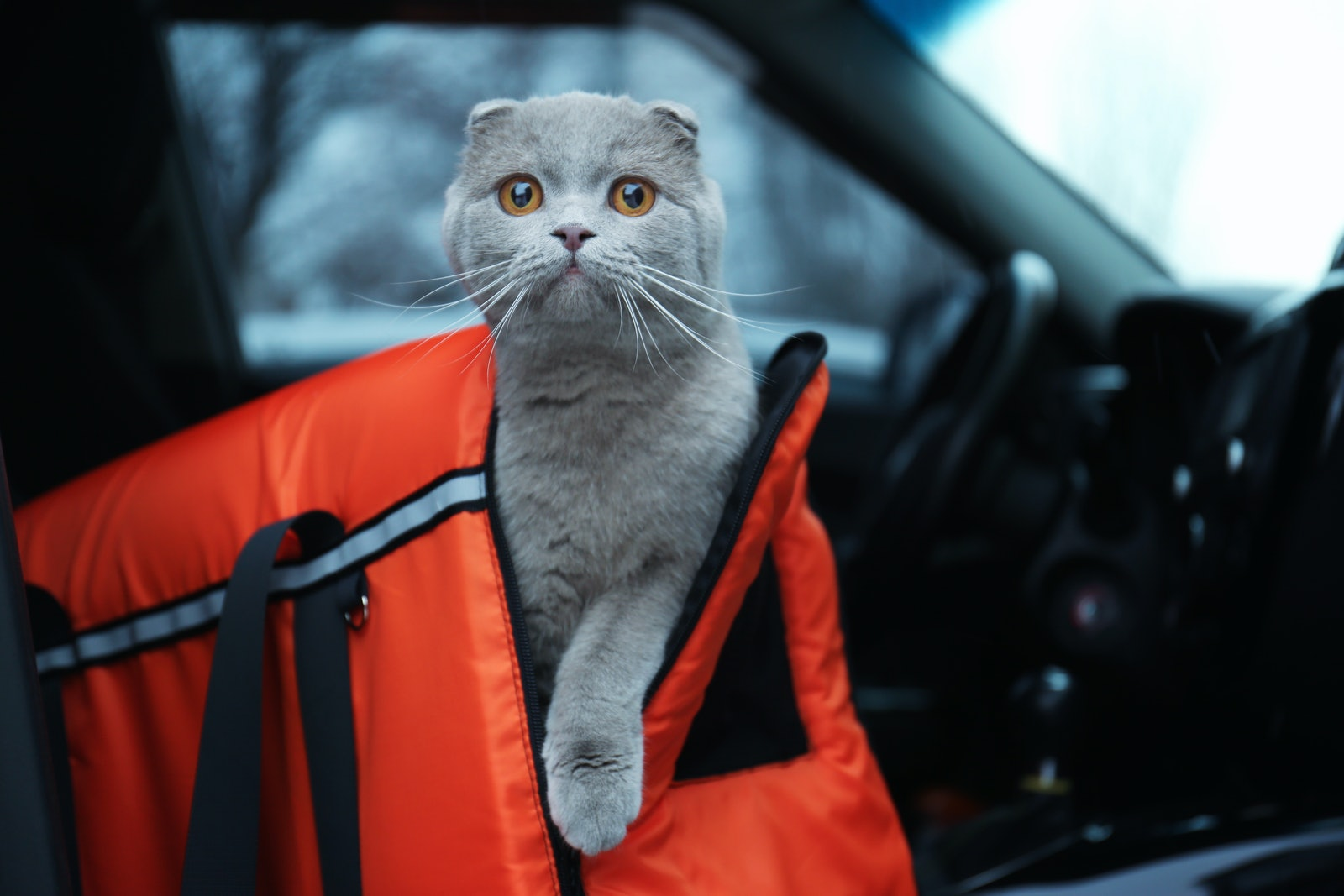 Best Cat Carriers for Scaredy Cats