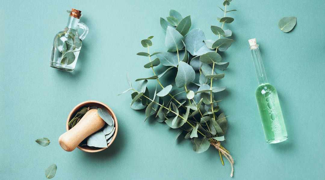 Bowl, bottles of eucalyptus essential oil, mortar, bunch of fresh eucalyptus branches on green background. Natual organic ingredients for cosmetics, skin care, body treatment.