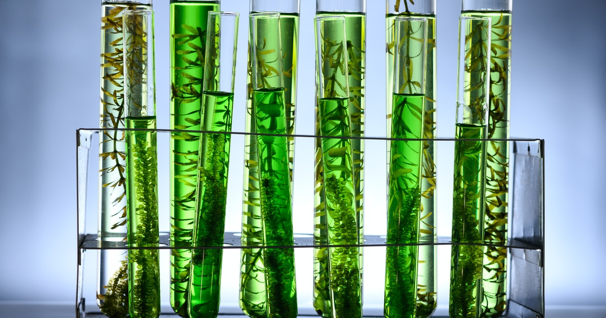 Turbo-boosted photosynthesis could mean cars running on algae