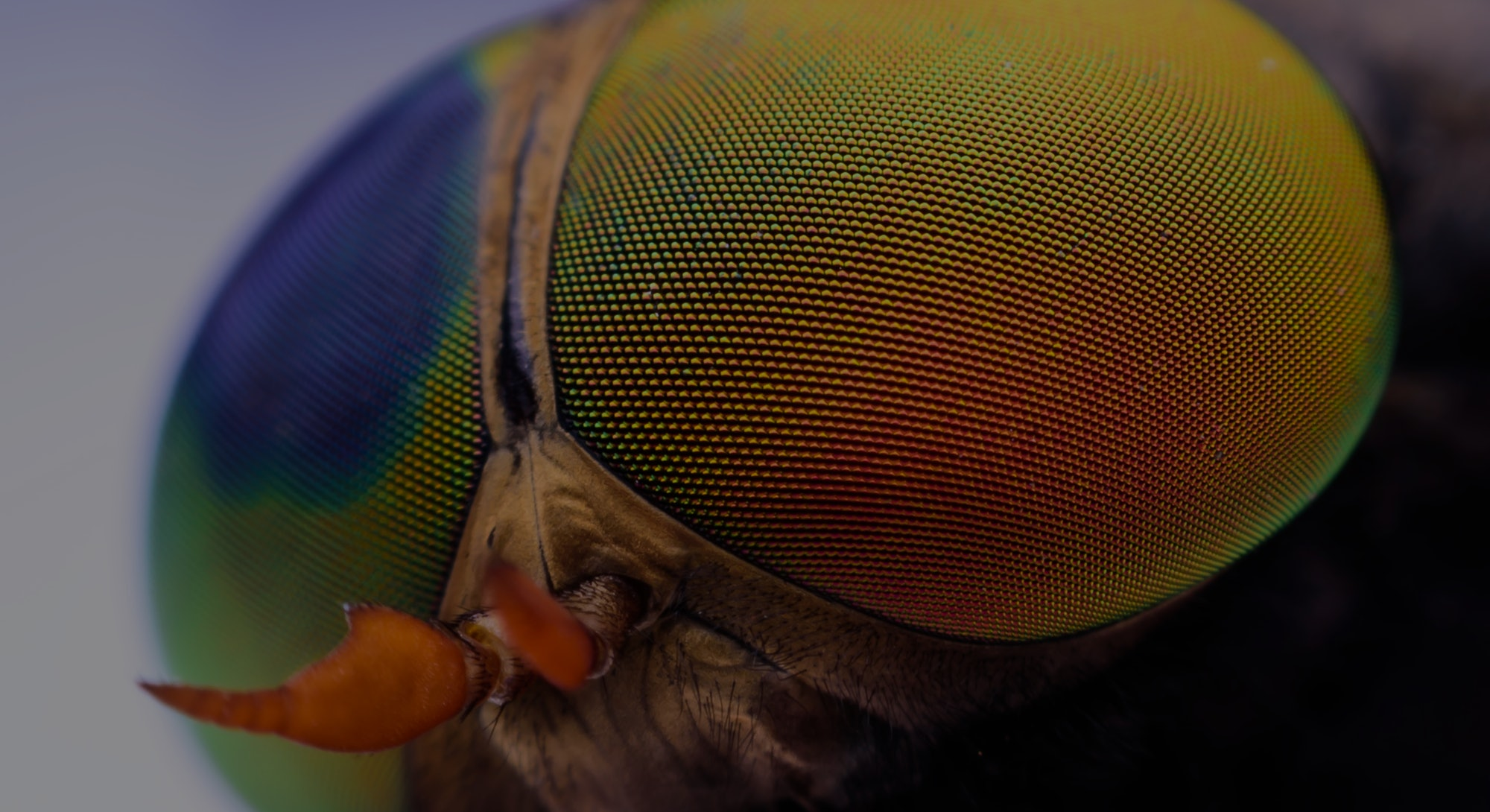 Macro sharp and detailed fly compound eye surface.