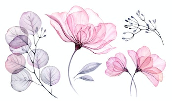 A watercolor transparent floral set is seen isolated on a white surface. It depicts roses, leaves, branches in pastel pink, grey, violet, purple colors.