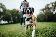 Adult stylish man playing with pet. Family outdoor. Animal lover. Happy dog enjoying freedom. Terrie...