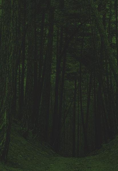 Dark deep forest trail view. Forest trail view. Forest trail scene. Deep forest trail