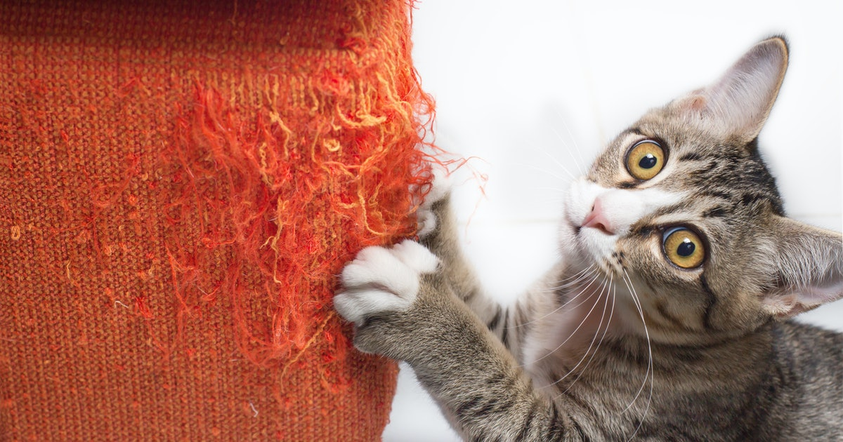 Calling All Cat Parents! These Sprays Will Stop Little Paws From Scratching Your Furniture