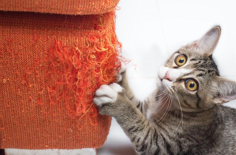 best cat repellent sprays