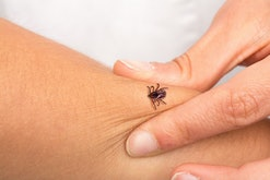 Tick that is biting an arm to a girl