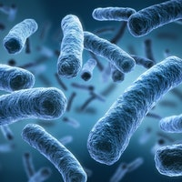 Magnetic bacteria may help animals navigate the globe