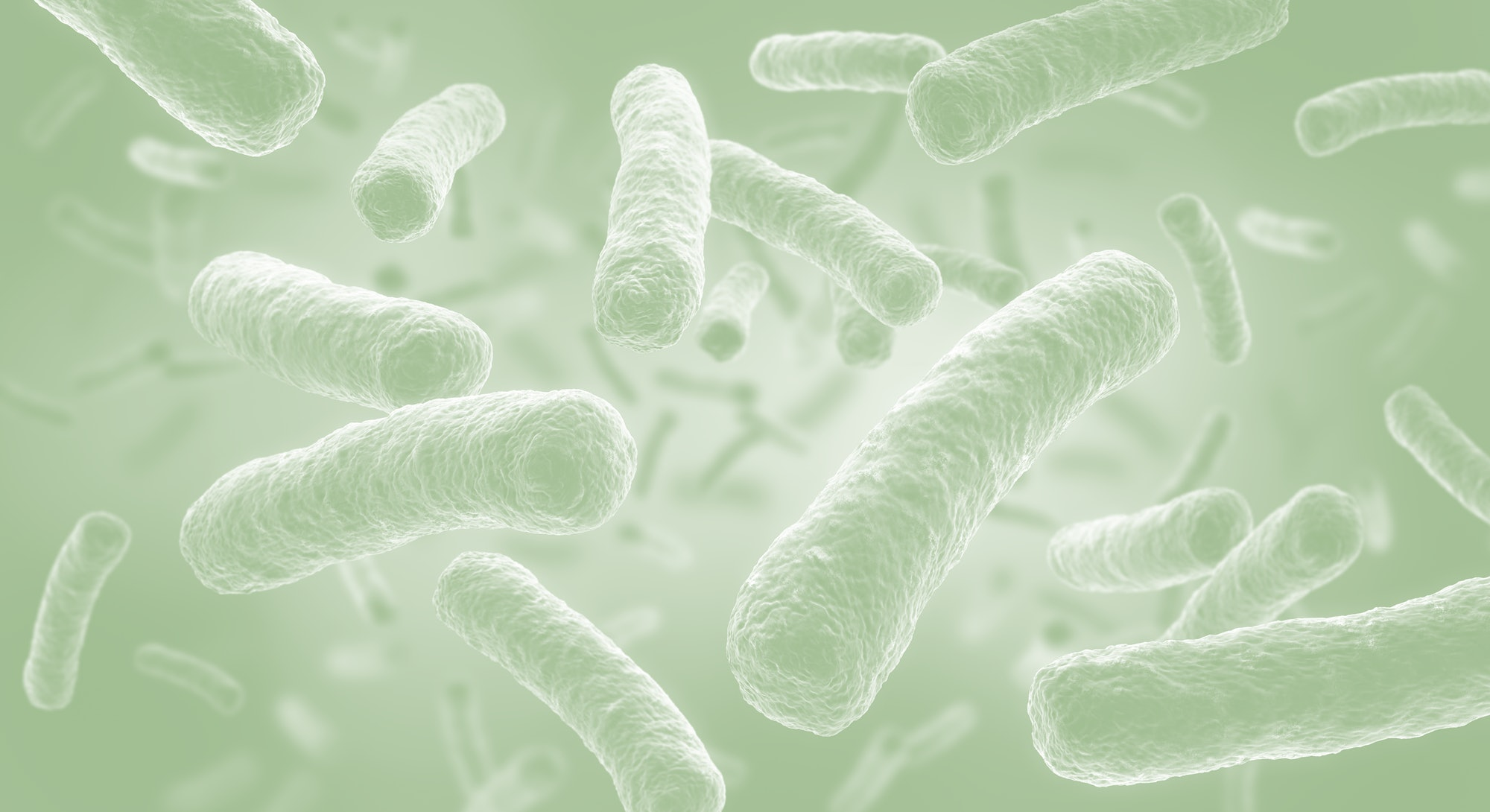 Legionella pneumophila - medical 3d illustration