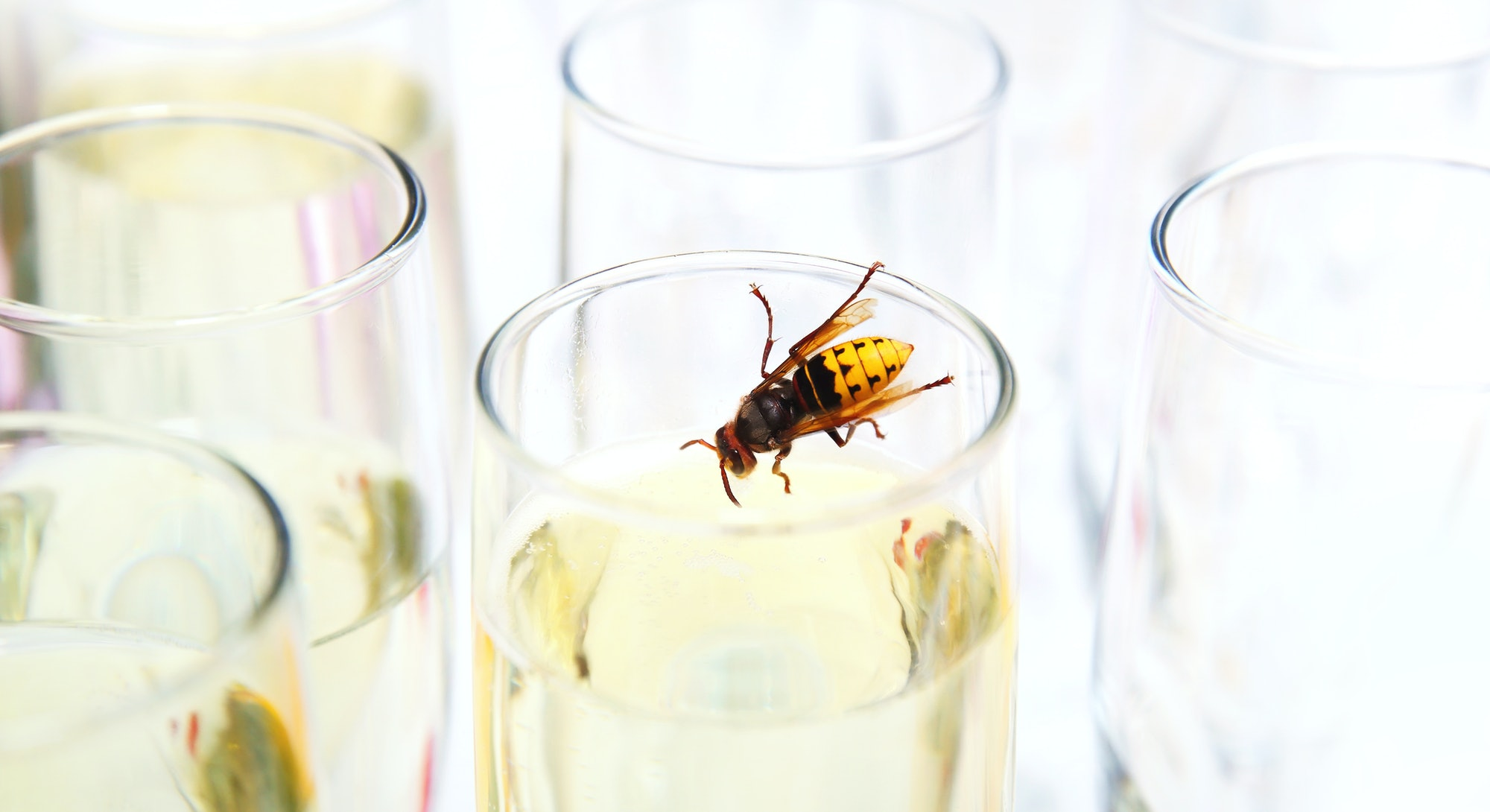 A wasp in a glass of champagne. Drinking animal