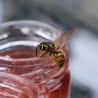 The science of why wasps are so annoying at the end of summer