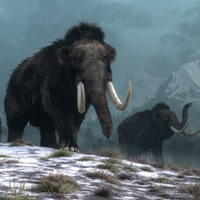 A trio of woolly mammoths trudges over snow covered hills.  Behind them, mountains with snow covered...
