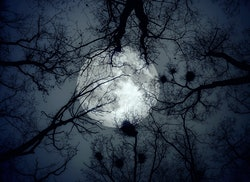 The moon in the night sky on a background of trees. Elements of this image furnished by NASA