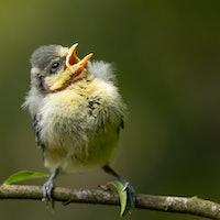 5 weird ways that birds communicate