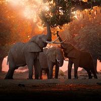 What's killing Botswana's elephants?