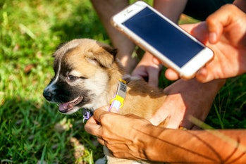 Identification of a lost animal with the help of the latest technology and the Internet. Collar with a QR chip with information about the owners and mobile phone. A little cute puppy