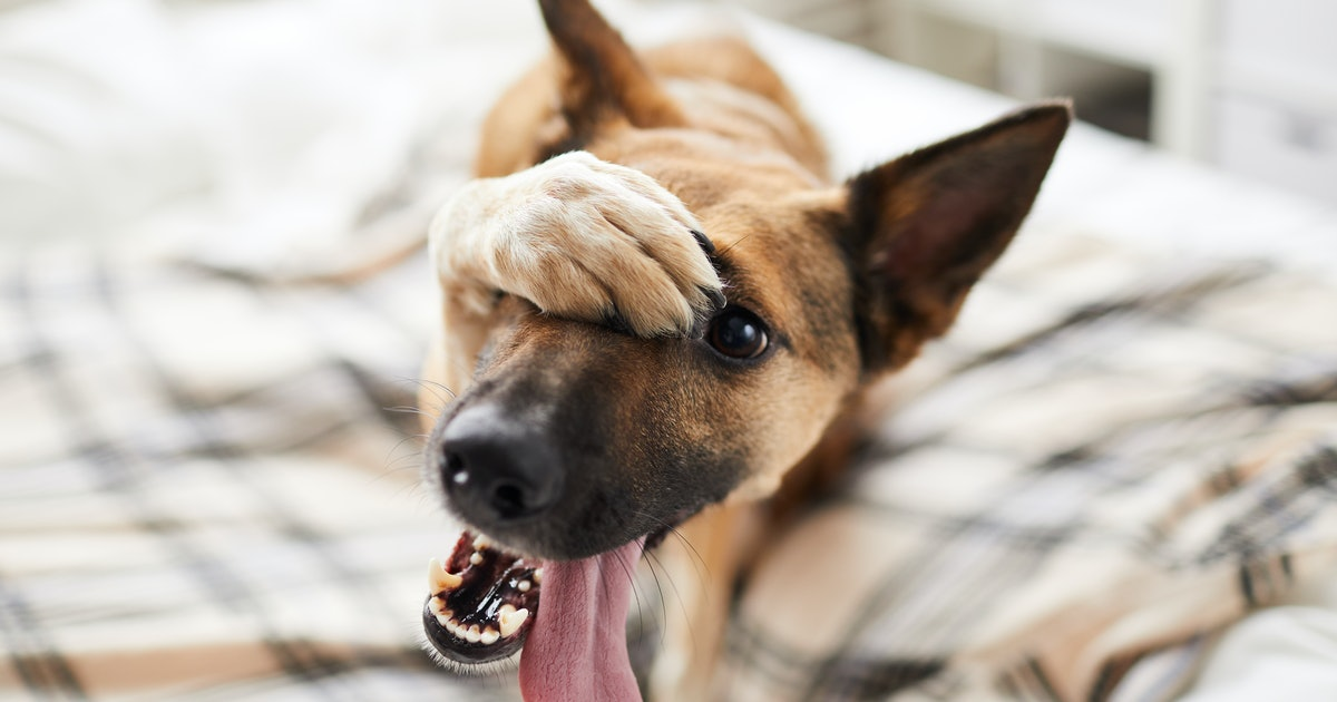 Study reveals one potential reason bad dog behaviors are hard to shake