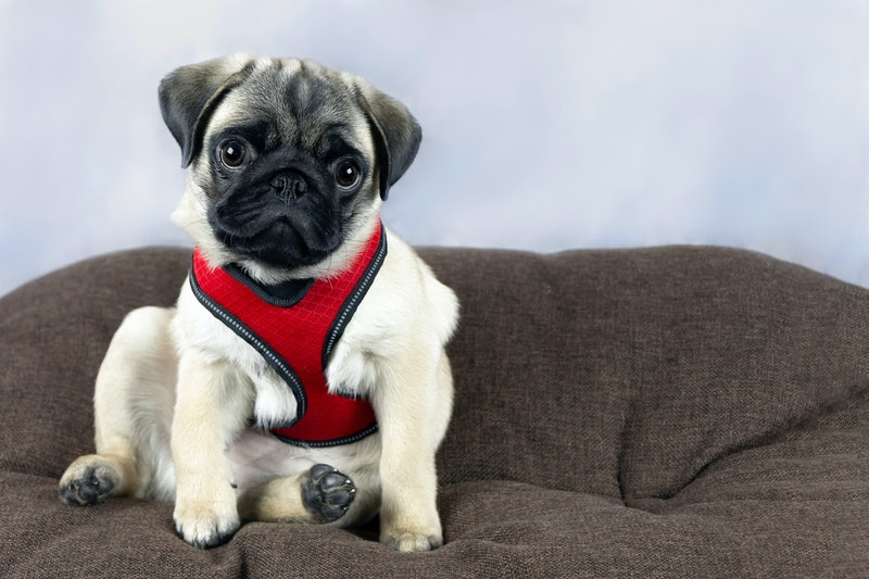 best puppy harnesses