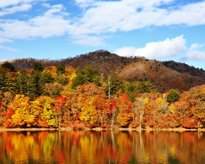 These fall song playlists include so many autumn vibes.