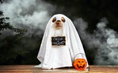 funny dog in ghost costume posing for Halloween