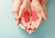 Adult and child holding kidney shaped paper, world kidney day, National Organ Donor Day, charity don...