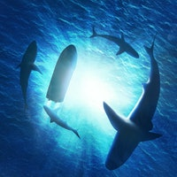 Why do sharks swim in circles? Science has finally solved it