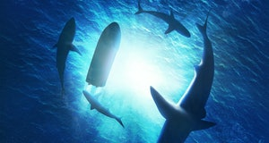 Illustration of sharks forming a circle under a boat in water