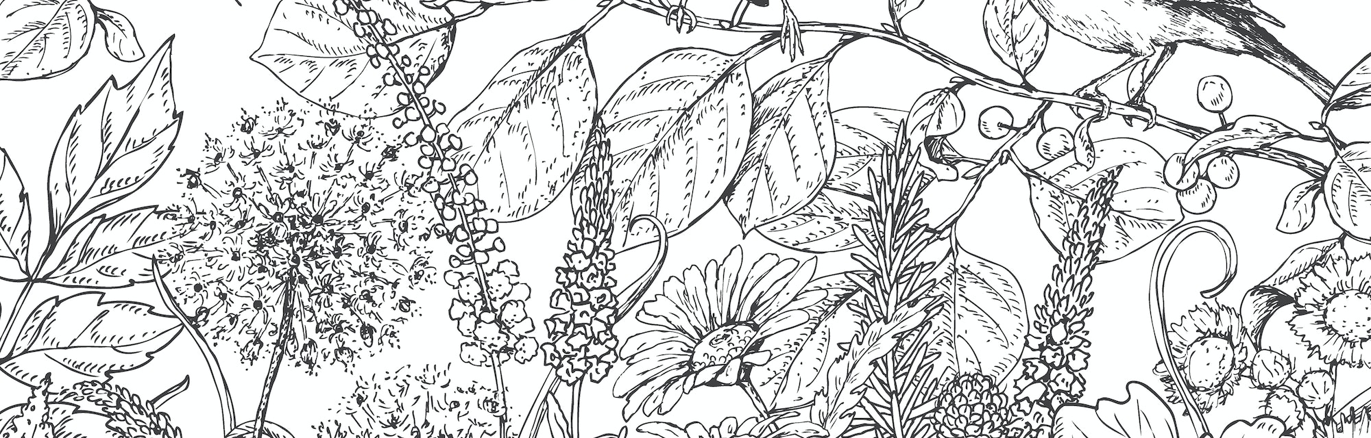 Hand drawn floral elements. Black and white flowers, plants, butterflies and two sitting songbirds on branch. Monochrome vector sketch.