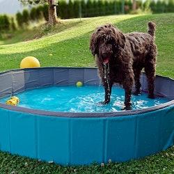 best dog pools on amazon