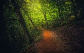 Fairy forest trail view. Trail in fairy forest. Fantastic wood trail. Forest trail. Forest trail landscape